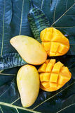 Mangoes on green leaves Stock Image