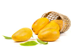 Mangoes In Basket With Leaves Stock Image