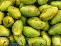 Mangoes ~ juicy fruit. Mangoes are juicy stone fruit & x28;drupe& x29; from numerous species of tropical trees belonging to the flowering plant genus Mangifera Royalty Free Stock Photos