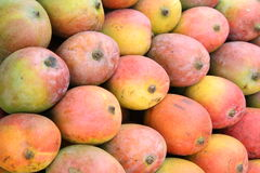 Mangoes. Multicolored fresh mangoes been arranged well for sale. which is farm fresh Stock Images