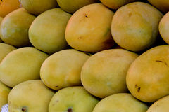 Mangoes. Raw and fresh mangoes, shown as raw, fresh and healthy fruit, or agriculture concept Royalty Free Stock Photography