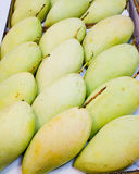 Mangoes. Sweet mangoes with green creamy texture when ripe and sweet flavored flesh Royalty Free Stock Image