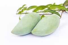 Mangoes on white background Royalty Free Stock Photography