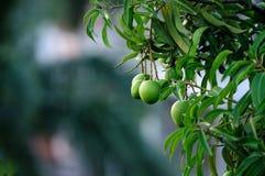 Mangofrüchte Stockbilder