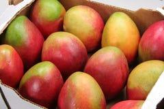 Mangofrucht Stockfotos