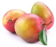Mangofrucht drei mit Blatt stockfotos