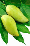 Mangofrucht- und Blattgrün Stockbilder