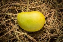 mangokleur Chartreuse Groen en geel naam yaikrom Aziatisch T Stock Foto's