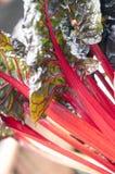 Mangold im hellen Sonnenschein Stockbild