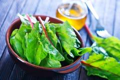 Mangold leaf Stock Photography