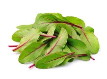 Mangold salad Royalty Free Stock Photo