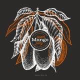 Mangoontwerpsjabloon Hand getrokken vector tropische fruitillustratie op schoolbord Gegraveerd stijlfruit Uitstekend exotisch voe royalty-vrije illustratie