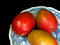 Mangos. Three mango fruit in a blue and white decorative bowl on a black background Stock Image