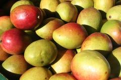 Mangos Stockfoto