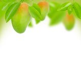 Mangos. Abstract background made of mango and leaves Royalty Free Stock Photography