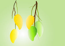 Mangos background ,green mango and yellow hanging Vector illustration Stock Images