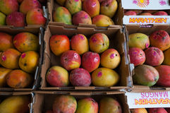 Mangos in boxes. Photo of boxed Mangos in a Waltham Market Stock Photography