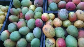 Mangos. Colorful mango, a tasty experience Stock Photography