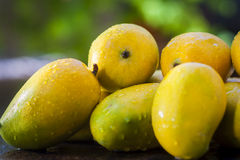 Mangos de Kesar Imagen de archivo