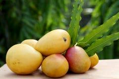 Mangos maduros amarillos frescos contra verde Imagenes de archivo