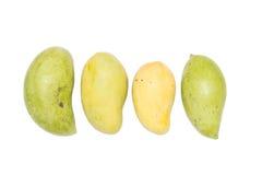Mangos maduros y crudos Fotografía de archivo