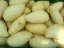 Mangos  Namdokmai-Sithong. Royalty Free Stock Images