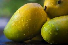 Mangos populares de Kesar Foto de archivo libre de regalías
