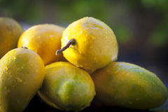 Mangos populares de Tasty&Juicy Kesar Fotografía de archivo libre de regalías