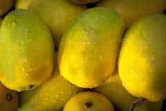 Mangos populares también conocidos como mangos de Kesar Imagen de archivo
