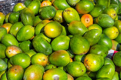 Mangos for sale at a market Royalty Free Stock Photography