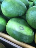 Mangos at their largest. Large green mangos Royalty Free Stock Images