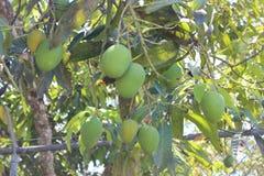 Mangos tropicales imagenes de archivo
