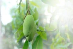 Mangos verdes Fotos de archivo
