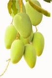Mangos verdes colgantes Imagenes de archivo