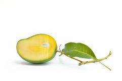 Mangos verdes con las hojas aisladas en blanco Fotos de archivo