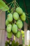 Mangos verdes en un fondo blanco Foto de archivo libre de regalías