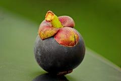 Mangostán Foto de archivo