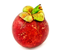 Mangostán aislado Imagen de archivo libre de regalías
