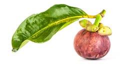 Mangostán con la hoja Imagen de archivo libre de regalías