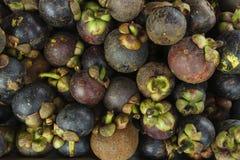 Mangostán de las frutas tropicales Imagen de archivo