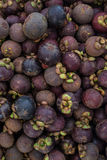 Mangostán de Tailandia fotografía de archivo