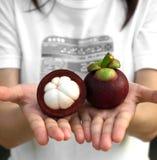 Mangostán en la mano Fotos de archivo