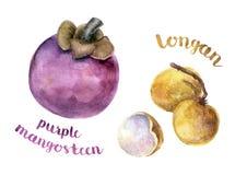 Mangostan en longan Stock Afbeeldingen