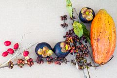 Mangostan, kawowe fasole i cacao owoc na stole, obraz royalty free