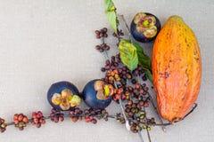 Mangostan, kawowe fasole i cacao owoc na stole, fotografia royalty free