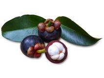 Mangostan owoc z liściem odizolowywającym na bielu obrazy royalty free