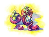 Mangostana esotico di Garcinia della frutta Immagini Stock Libere da Diritti