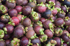 Mangostanfrucht Lizenzfreies Stockbild