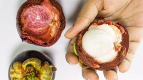 Mangostanfrucht an Hand Lizenzfreie Stockbilder