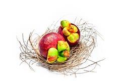 Mangostanfrucht im Nest des Vogels Stockbilder